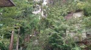 木に埋もれてしまった別荘